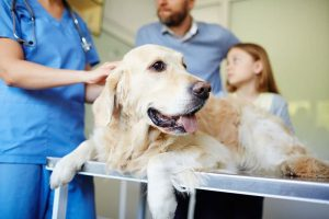 Factors to Consider When Choosing a Vet Hospital